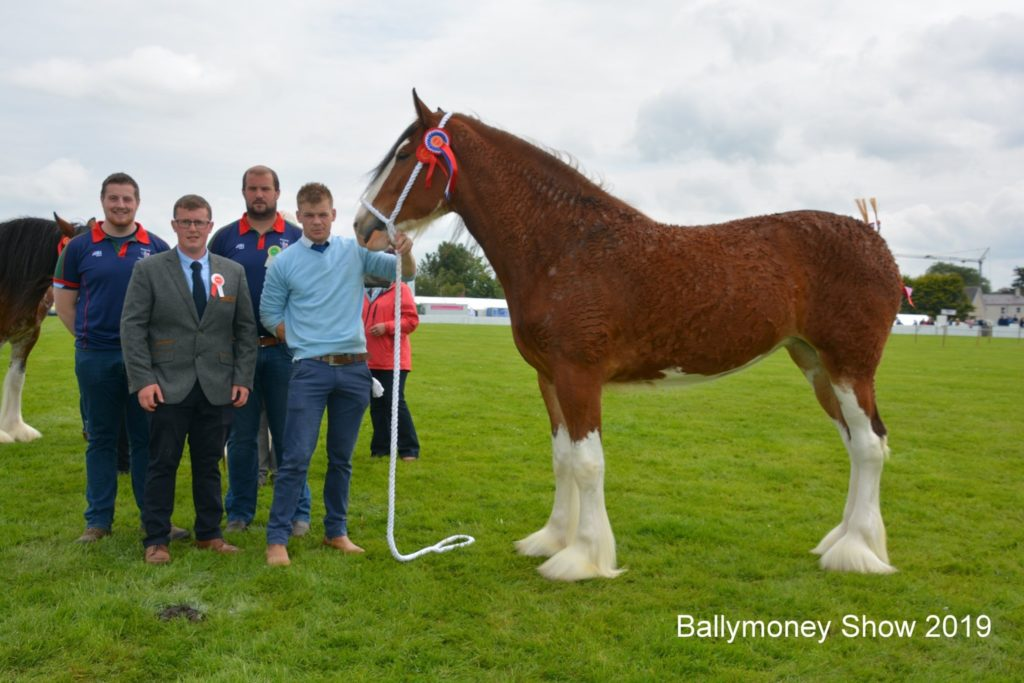 people next to a horse at the ballymoney show 2019